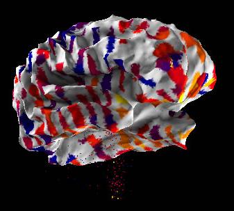 Allen Human Brain Atlas