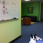 Competition for office mascot at Limeade: Dog versus white board bunny.