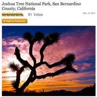 joshua-tree1