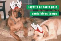 holidaycards-dogs