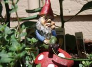 gnome-featured