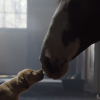 "Budweiser's ""Puppy Love"" Super Bowl commercial was a smashing success in 2014."