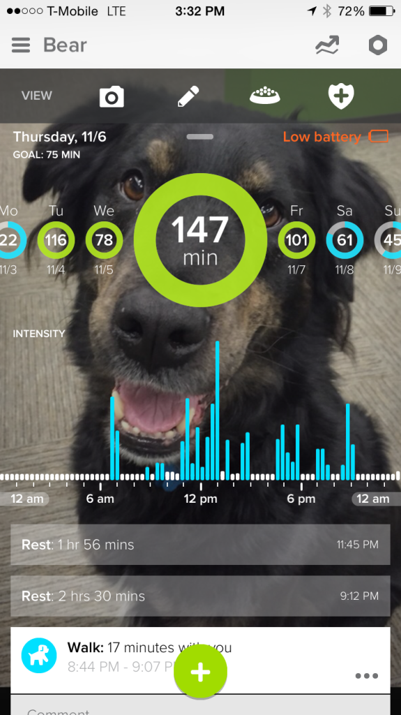 whistle stats - dog walk with Todd