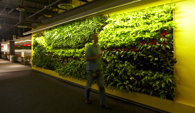 The living plant wall at Edifecs' new office in Redmond.