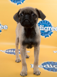 Photo via Animal Planet/Puppy Bowl/Bowser