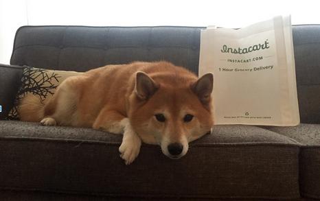Instacart dog