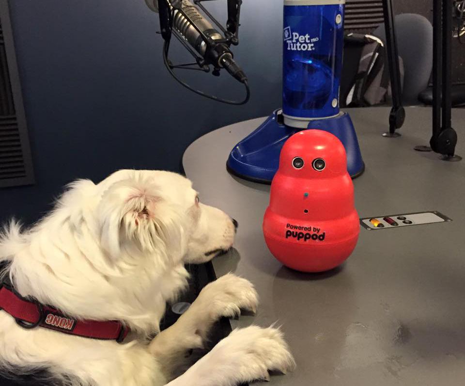 Dog venture partners