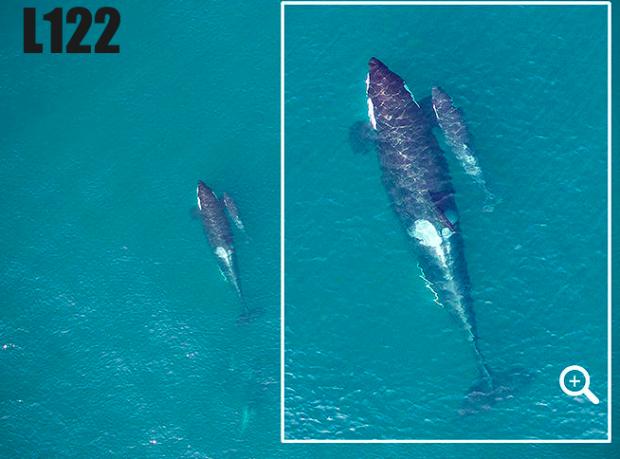 Photo via Whale Research Center