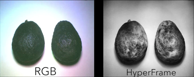 HyperCam had 94 percent accuracy when predicting the ripeness of fruits, compared to just 62 percent for standard cameras. Photo via UW