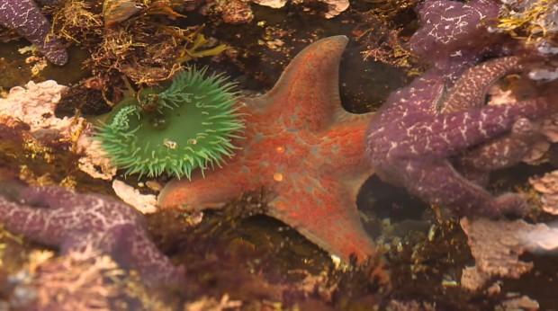 151110-starfish