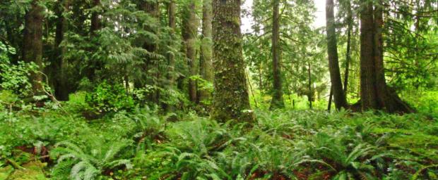 Photo via Nisqually Land Trust/Mount Rainier Gateway Project