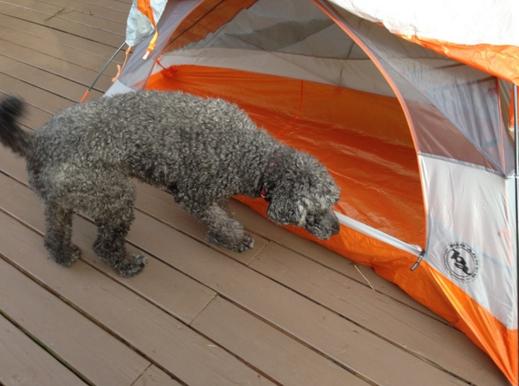 Photo via RedditGifts/NayaTheNinja's dog enjoys her new tent from Bill Gates