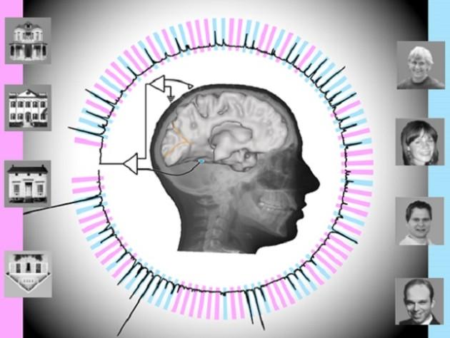 Brain experiment