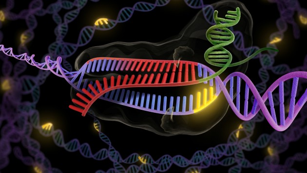 "CRISPR-Cas9 technology uses ""molecular scissors"" to cut and splice DNA, as shown in this graphic. (Credit: Berkeley Lab)"