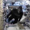 Scott Kelly in gorilla suit