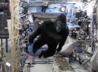 Scott Kelly in gorilla suit