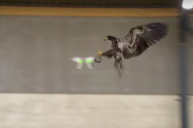 Guard From Above trains birds of prey to snatch drones out of the sky (Photo: Guard From Above).