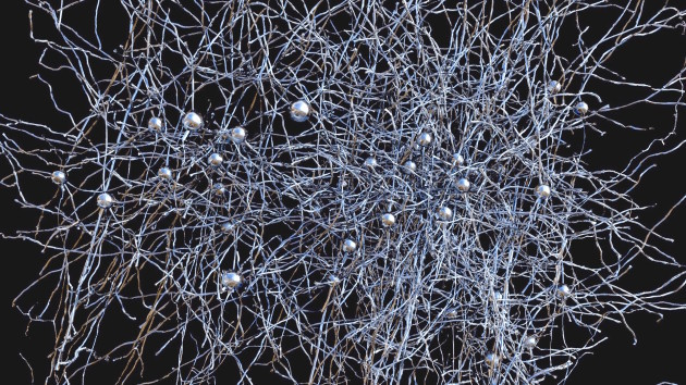 Neuron network in brain