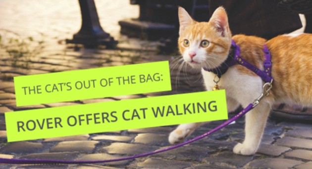 Rover cat walking
