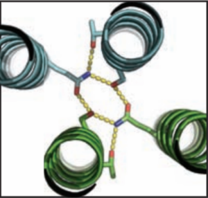 A molecular model shows a synthetic protein design with a single hydrogen-bond network. (Credit: Boyken et al. / Science)