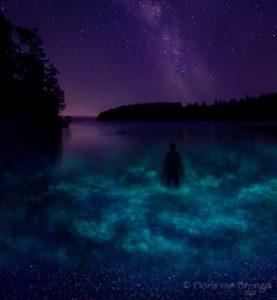 Bioluminescence at Shaw Island