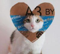 Amazon Prime Day cat