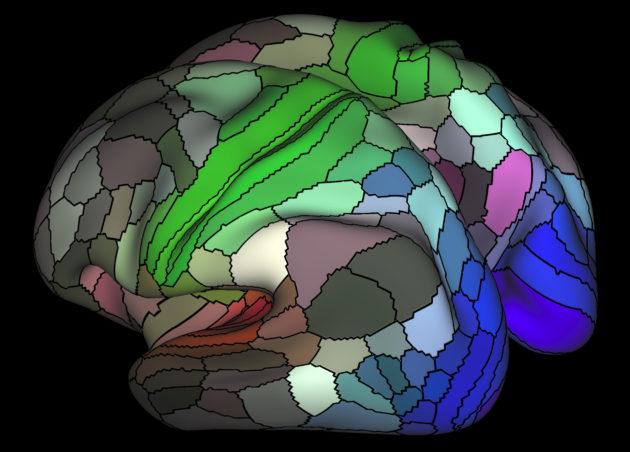 Human brain map