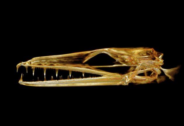Fish scan