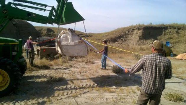 Dinosaur find for Burke Museum