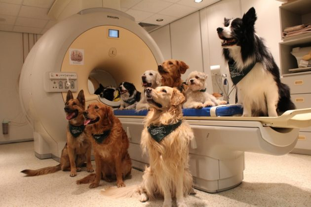 Dogs at scanner