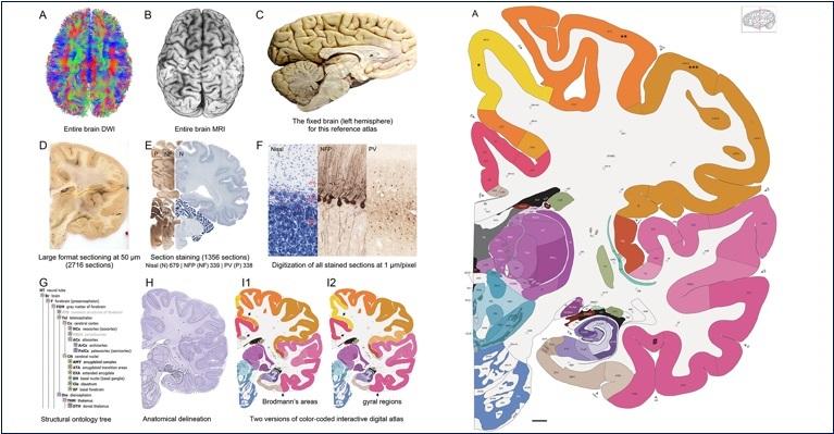 Anatomy Classes Curiosities - Magazine cover