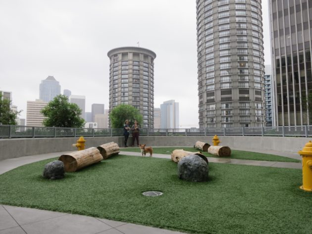 Amazon's rooftop dog park.