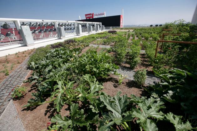 The Faithful Farm. Photos via San Francisco 49ers.