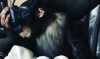 Chimp VR