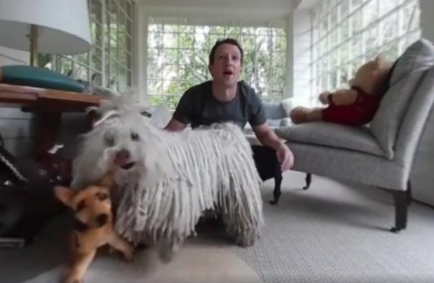Mark Zuckerberg Walking His Dog