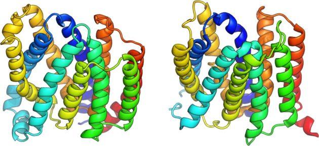 Protein diagrams