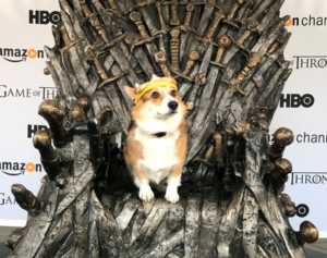 Game of Thrones dog