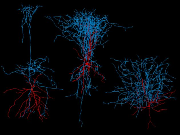 Axons and dendrites