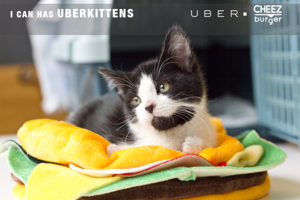 UberKittens-600x400