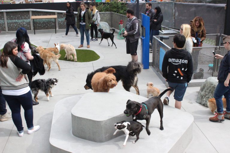 On 'Bring Your Dog to Work Day,' it's business as usual for