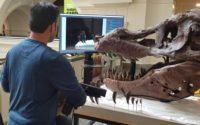 T. rex scan