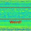 Weird Signal at Arecibo