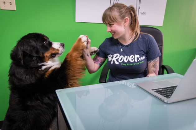 Rover raises $65M round led by Spark Capital as pet-sitting startup aims for more growth