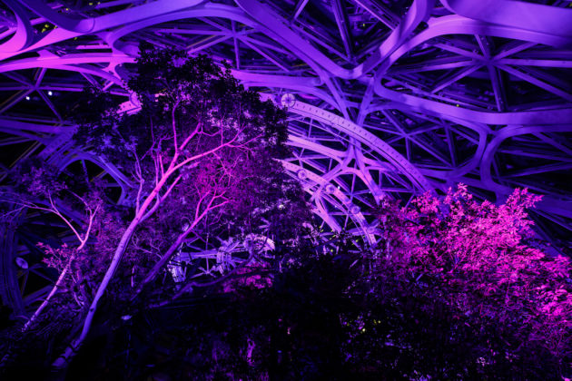 amazon spheres and other seattle landmarks lit up in purple to mark