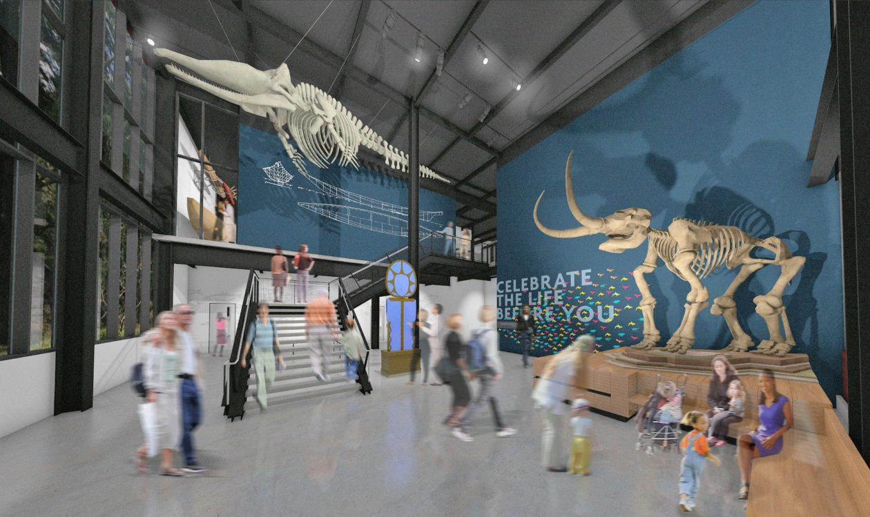 Get An Inside Look At The New Burke Museum Plus A T Rex