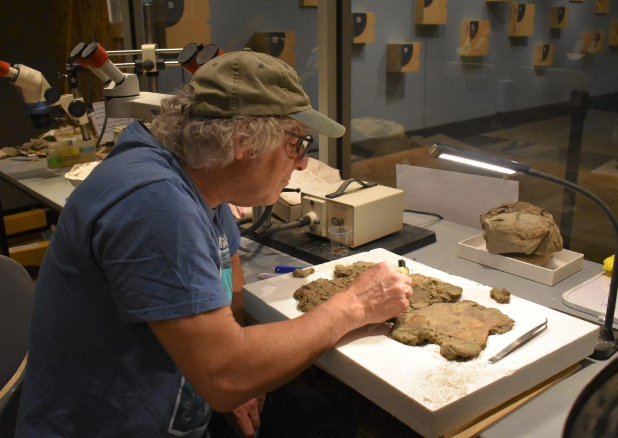 Preparing fossils