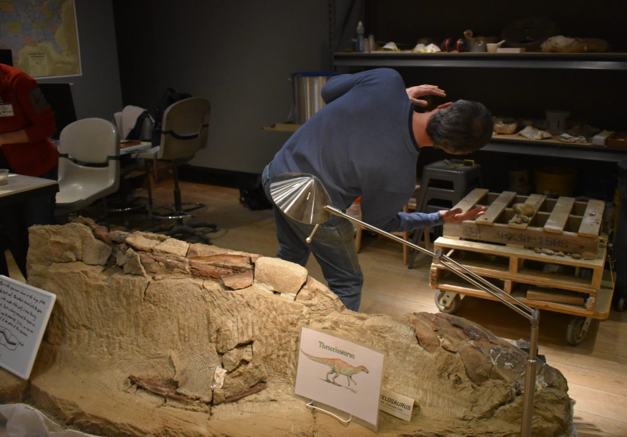Thescelosaurus bones