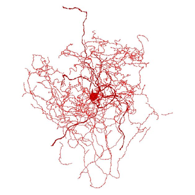 New and mysterious human brain cell discovered