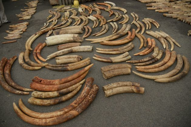 DNA evidence zeroes in on three African cartels behind illegal elephant ivory trade