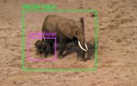 Elephant image recognition